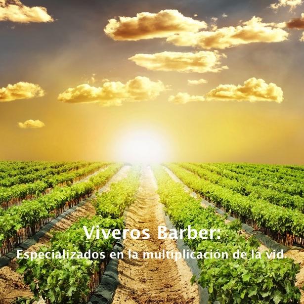 viveros_barber