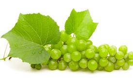Plantas de uvas blancas
