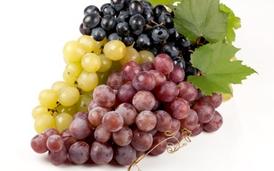Plantas de uvas de mesa