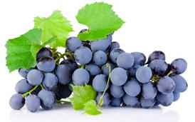 Plantas de uvas tintas